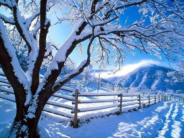 iarna2
