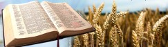 biblia grau
